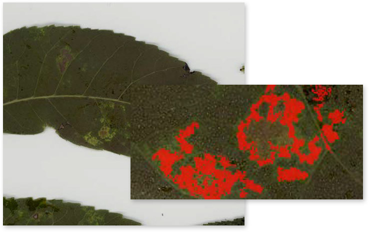 Media Cybernetics Image Analysis Solutions and Applications: Life Sciences (Plant Disease)